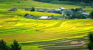 Красота террасных полей Tu Le, Yen Bai, Вьетнама Стоковые Фотографии RF