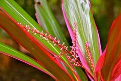 Красота тропического леса Стоковые Фото