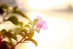Красота цветка и захода солнца в природе на городе Таиланда Стоковое Изображение