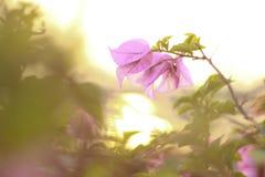 Красота цветка и захода солнца в природе на городе Таиланда Стоковое фото RF
