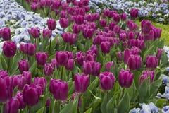 Красота цветков весны Стоковое Изображение