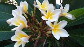Красота цветков, предлагает что все еще доверие и искренность Стоковое Изображение