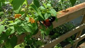 Красота цветов и картина бабочки акции видеоматериалы
