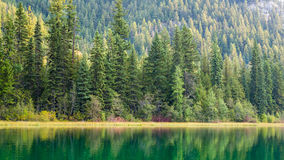 Красотка в природе Стоковое фото RF