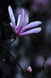 Красотка в природе Стоковое Изображение