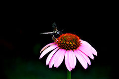 Красотка в природе Стоковые Фотографии RF