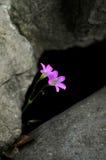 Красотка в природе Стоковое Фото