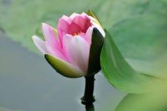 Красотка в природе Стоковая Фотография RF