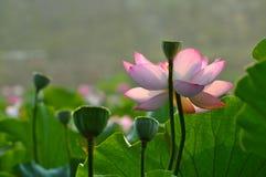 Красотка в природе Стоковые Фото