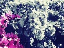 Красотка в природе Стоковая Фотография
