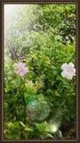 красотка естественная Стоковая Фотография
