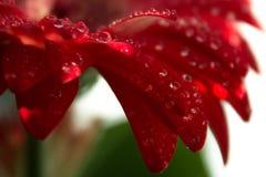 Красотка природы Стоковое Фото