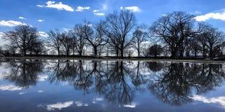Красотка природы Стоковая Фотография
