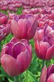 красотка флористическая Стоковое Изображение RF