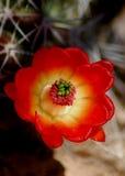 красотка Стоковая Фотография RF