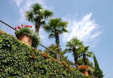 красотка ii тропическое Стоковая Фотография