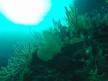 Красоты коралла Стоковое Изображение RF