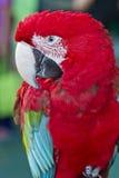 Красочная ара птицы попугая, зеленых и красных Стоковое Фото