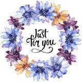 Красочная африканская маргаритка Флористический ботанический цветок Квадрат орнамента границы рамки иллюстрация штока