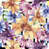 Красочная африканская маргаритка Флористический ботанический цветок Безшовная картина предпосылки бесплатная иллюстрация