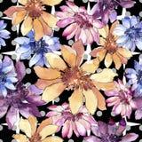 Красочная африканская маргаритка Флористический ботанический цветок Безшовная картина предпосылки иллюстрация штока