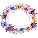 Красочная африканская маргаритка Флористический ботанический цветок Квадрат орнамента границы рамки иллюстрация вектора