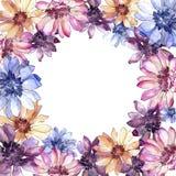 Красочная африканская маргаритка Флористический ботанический цветок Квадрат орнамента границы рамки бесплатная иллюстрация