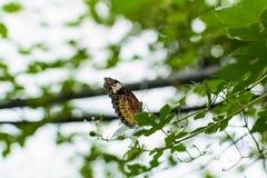 Красочная бабочка с зеленой предпосылкой стоковые фотографии rf