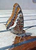 Красочная бабочка Стоковое Фото
