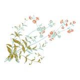 Красочная ботаническая нарисованная рука разветвляет с цветками, он Стоковое Фото