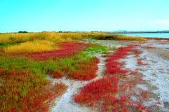 Красочная вегетация озера соли Стоковое Фото