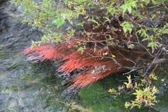 Красочная вода в национальном парке Jiuzhaigou Стоковые Фото