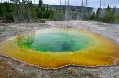 Красочная вода Стоковые Изображения RF