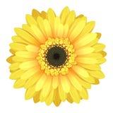 Красочная голова цветка gerbera Стоковое Изображение
