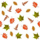 Красочная декоративная ботаническая безшовная картина с листьями стоковые фото