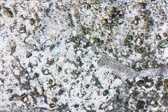 Красочная естественная каменная текстура предпосылки текстура камня детали конца предпосылки зодчества вверх Закройте вверх камен Стоковое фото RF