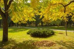 Красочная золотая листва в парке осени Стоковые Фото