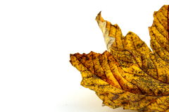 Красочная изолированная листва осени Стоковые Изображения