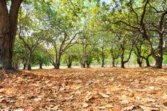 Красочная листва в поле для гольфа осени Стоковые Изображения