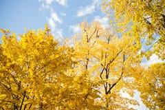 Красочная листва в backgroun неба листьев осени парка осени Стоковое Изображение
