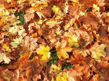 Красочная картина листьев осени, Литва Стоковая Фотография RF
