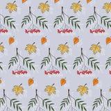 Красочная картина осени с ягодами и кленовыми листами рябины Стоковое Изображение