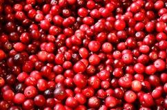 Красочная красная предпосылка клюкв лежа на поверхности Стоковое фото RF