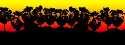 Красочная красная черная предпосылка силуэта ветви пальмы сахара строки, джунгли предпосылки ладони формы дерева, заход солнца ис Стоковая Фотография