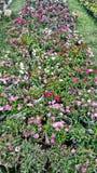 Красочная общая предпосылка цветка природы весны Pursuance стоковые фотографии rf