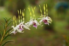 Красочная орхидея Стоковые Изображения