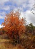 Красочная осень в горах волка Юты! стоковая фотография