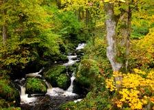 Красочная осень в лесе стоковые изображения