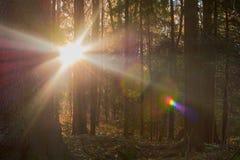 Красочная осень в парке с солнцем излучает стоковое фото rf