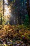 Красочная осень в парке с солнцем излучает стоковое изображение